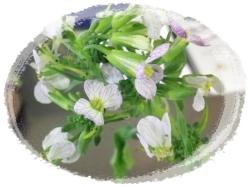 ダイコンの花