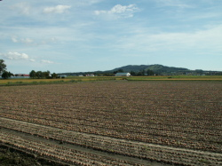 玉ねぎ畑~長沼